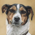 dog portraits in pastel