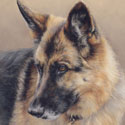 German Shepherd dog pastel portrait