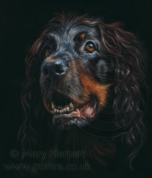 Gordon Setter portrait by Mary Herbert