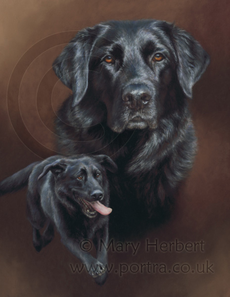 black GSD cross portrait by Mary Herbert