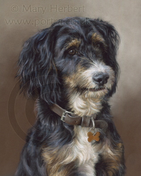mixed breed dog portrait by Mary Herbert