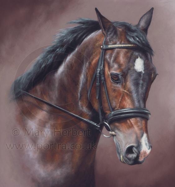 bay  horse portrait by Mary Herbert