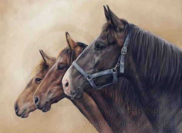 triple horse portrait by Mary Herbert