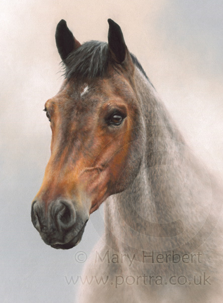 strawberry roan new forest pony portrait by Mary Herbert