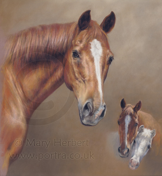 chestnut horse portrait by Mary Herbert