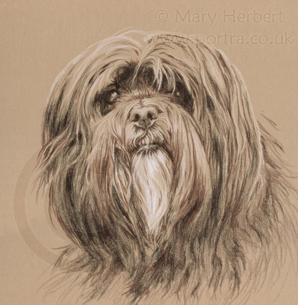 dog sketch portrait by Mary Herbert