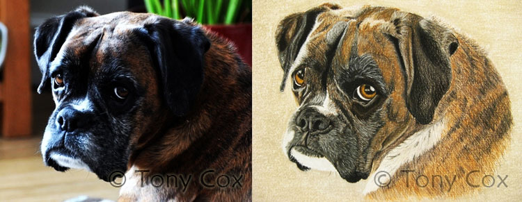 Sample critique: Tony's dog portrait
