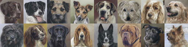 Portfolio of Dog Portraits