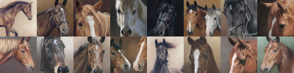 Portfolio of Horse Portraits